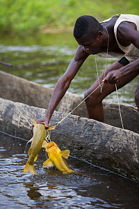 Fishermen pulling in catch from Congo river, the border between Congo Brazzaville and Democratic Republic of Congo (DRC)  -  Cyril Ruoso