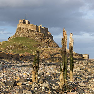 Lindisfarne Castle on Holy Island, Northumberland, England, UK. April 2013. - Adam Burton