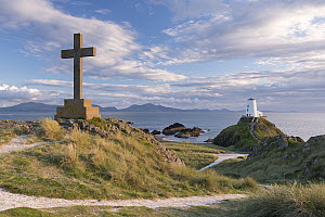 Cross and distant lighthouse on Llanddwyn Island, Anglesey, Wales, UK. September 2013. - Adam Burton