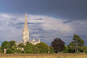 Salisbury Cathedral on a summer evening, Salisbury, Wiltshire, England, UK. July 2014.  -  Adam Burton