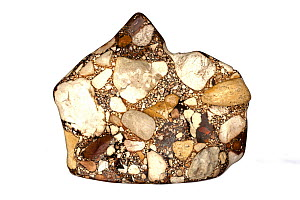Conglomerate or puddingstone, a sedimentary rock. From Tennessee.  -  John Cancalosi