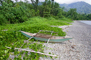 Small dugout canoe with outriggers on beach with beach Morning glory flowers (Convolvulaceae) Bantanta Island, Papua, Indonesia  -  Tim  Laman