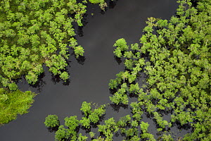 Aerial view of forest and swamps in Yimas Lakes area, Papua New Guinea, August. - Tim  Laman