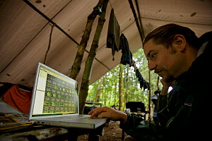 Edwin Scholes reviewing videos on his laptop at base camp in the lowland rainforest near Oransbari, West Papua, New Guinea. August 2009.  -  Tim  Laman
