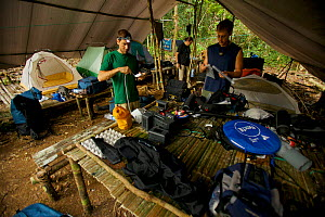 Expedition team packing up the lowland forest base camp near Oransbari, West Papua, Indonesia.  -  Tim  Laman