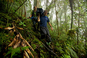 Eric Liner and Ian Fein hiking through the misty montane forest of the Arfak Mountains, New Guinea. September 2009. - Tim  Laman
