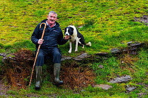 Farmer at sheepdog trial in Caitins, Kells Area, Ring of Kerry, Iveragh Peninsula, County Kerry, Ireland, Europe. September 2015.  -  Juan  Carlos Munoz