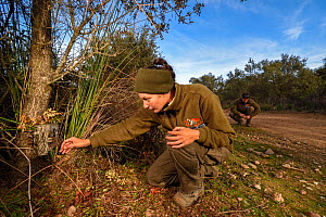 Biologist from  Iberlince Project monitoring Iberian lynx (Lynx pardinus) examining camera trap, Andalusia, south of Spain. December 2015. - Laurent Geslin