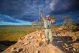 A researcher from the Endangered Wildlife Trust stands on a hill top while tracking African wild dogs (Lycaon pictus) using radio telemetry equipment on Venetia Limpopo Nature Reserve, South Africa.  -  Neil Aldridge
