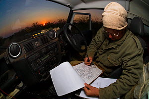 A researcher from the Endangered Wildlife Trust plots the position of an African Wild Dog (Lycaon pictus) pack on a map inside a Land Rover at dawn on Venetia Limpopo Nature Reserve, Limpopo Province,...  -  Neil Aldridge