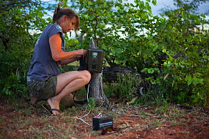 Researcher from the Endangered Wildlife Trust sets up a camera trap to monitor predator movements on Mapungubwe National Park, Limpopo Province, South Africa. February 2010.  -  Neil Aldridge