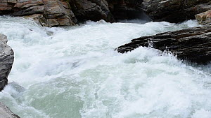 Rapids in a mountain river, Gran Paradiso National Park, Graian Alps, Italy, June. - Philippe Clement