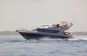 Prestige 620S motorboat in Miami, Florida, USA, February 2013.  -  Billy  Black