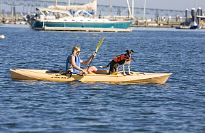 Kayaker with dog in Newport, Rhode Island, USA. September 2006.  -  Billy  Black