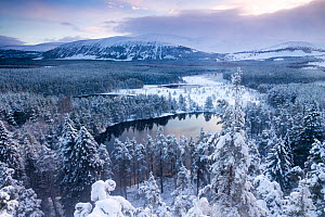 View over Uath Lochans before sunrise following heavy snowfall, Cairngorms National Park, Scotland, UK, November 2015. - SCOTLAND: The Big Picture
