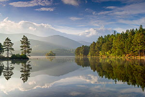 Loch an Eilein with wooded edges in morning sun, Cairngorms National Park, Scotland, UK, October 2015.  -  SCOTLAND: The Big Picture