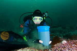 Scientist from the Heriot Watt scientific dive team taking samples to assess the biodiversity of a Marine Protected Area, Shetland, Scotland, UK, September 2012. - SCOTLAND: The Big Picture