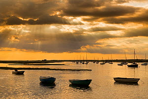 Fishing boats at Brancaster harbour at high tide on a calm summer evening, Norfolk, UK, July 2016.  -  Ernie  Janes