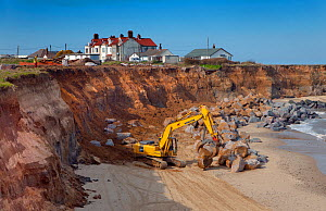 RF- Excavator with grapple used for building sea defences at Happisburgh, Norfolk, UK, March. (This image may be licensed either as rights managed or royalty free.)  -  Ernie  Janes