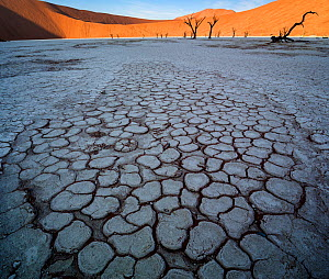 Deadvlei, with dessicated 900 year old trees standing in the salt pan surrounded by towering red sand dunes. Namib-Naukluft National Park, Namibia. June 2013. - Jack Dykinga