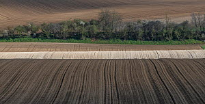 Fields ploughed with sugar beet seedlings,   Villers Le Sec, France, April 2016.  -  Pascal  Tordeux