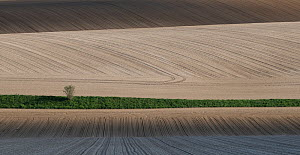 Farmland fields ploughed and planted with sugar beet seedlings,   Villers Le Sec, France, April 2016.  -  Pascal  Tordeux