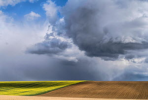 Large sky over farmland landscape with Oilseed rape (Brassica napus) flowering next to ploughed land,  Picardy, France, April 2016.  -  Pascal  Tordeux