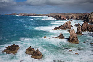 Sea stacks in stormy sea, Mangurstadh / Mangersta, Isle of Lewis, Outer Hebrides, Scotland, UK, April 2014.  -  SCOTLAND: The Big Picture