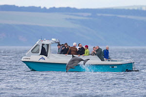 Tourists on boat watching Bottlenose dolphin (Tursiops truncatus), Moray Firth, Inverness-shire, Scotland, UK, July 2013.  -  SCOTLAND: The Big Picture