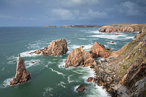 Sea stacks off west coast of Lewis at Mangurstadh / Mangersta, Isle of Lewis, Outer Hebrides, Scotland, UK, October 2014.  -  SCOTLAND: The Big Picture
