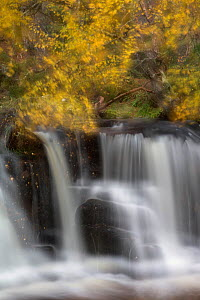 Abstract of waterfall with Silver birch (Betula pendula) above, Glenfeshie, Cairngorms National Park, Scotland, UK, October 2014.  -  SCOTLAND: The Big Picture