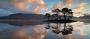 Scots pine (Pinus sylvestris) trees reflected in Loch Maree at dawn with Slioch in background, Wester Ross, Scotland, UK, November 2014. - SCOTLAND: The Big Picture