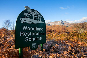 Scottish Natural Heritage  Woodland Restoration Scheme sign on Beinn Eighe National Nature Reserve, Kinlochewe, Wester Ross, Scotland, November 2014. - SCOTLAND: The Big Picture