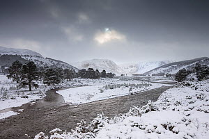 Braided channel of River Feshie in winter, Glenfeshie, Cairngorms National Park, Scotland, January 2015. - SCOTLAND: The Big Picture