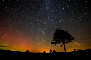Scots pine (Pinus sylvestris) silhouetted against night sky, Cairngorms National Park, Scotland, UK, October 2015. - SCOTLAND: The Big Picture