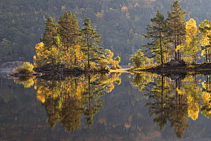 Reflections of trees in Loch Beinn a Mheadhoin, Glen Affric, Highlands, Scotland, UK, October 2015. - SCOTLAND: The Big Picture