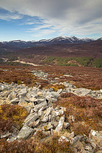 View looking north along Glen Quoich from Creag Bhaig, Mar Lodge, Deeside, Cairngorms National Park, Scotland, UK, April 2016.  -  SCOTLAND: The Big Picture