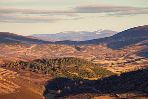 View over patchwork of grouse moorland in eastern Grampians, Deeside, Cairngorms National Park, Scotland, UK, April 2016.  -  SCOTLAND: The Big Picture