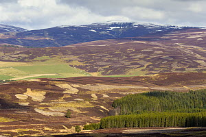 Patchwork of heather moorland and commercial forestry on grouse shooting estate, Deeside, Cairngorms National Park, Scotland, UK, April 2016.  -  SCOTLAND: The Big Picture