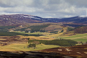 Patchwork of heather moorland, commercial forestry and sheep pasture on grouse shooting estate, Glenlivet, Cairngorms National Park, Scotland, UK, April 2016. - SCOTLAND: The Big Picture