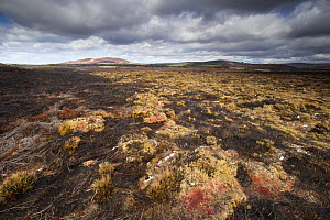Area of fresh muirburn showing burnt heather, Lochindorb Estate, Deeside, Cairngorms National Park, Scotland, UK, April 2016.  -  SCOTLAND: The Big Picture