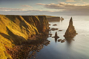 Sea stacks in morning light, Duncansby Head, John O Groats, Caithness, Scotland, UK, April 2015.  -  SCOTLAND: The Big Picture