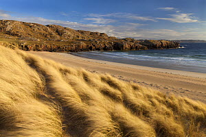 Oldshoremore Beach and dunes in evening light, Kinlochbervie, Sutherland, Scotland, UK, April 2014. - SCOTLAND: The Big Picture