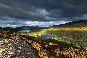 Elevated view over lochs and pine forest, Rothiemurchus, Cairngorms National Park, Scotland, UK, September 2013.  -  SCOTLAND: The Big Picture