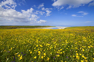 Flowering machair, South Uist, Outer Hebrides, Scotland, UK, July - SCOTLAND: The Big Picture