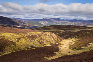 Patchwork of upland heather moorland on grouse shooting estate, northern Scotland, UK, April 2016. - SCOTLAND: The Big Picture