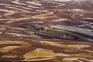 Patchwork of upland heather moorland on grouse shooting estate, northern Scotland, UK, April 2016. northern Scotland, UK, April 2016. - SCOTLAND: The Big Picture