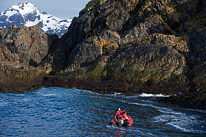 Wandering albatross (Diomedea exulans) survey team checking islet supporting small albatross colony near Weddell Point on South Georgia, January 2015  -  David Tipling
