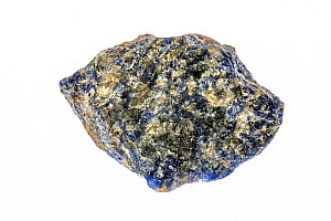 Sodalite, royal blue tectosilicate mineral specimen, on white background  -  Philippe Clement