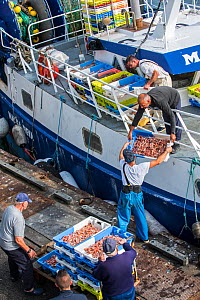 Fishermen on board of trawler fishing boat unloading catch along quay of the fish auction market, Brittany, France, September 2015  -  Philippe Clement